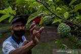 Pengembangan Agrowisata dalam Kota