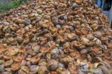 Potensi Pengembangan Usaha Sabut Kelapa
