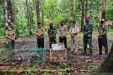 BBKSDA melepas satwa endemik Papua hampir punah
