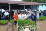 Sebanyak ini, capaian produksi padi di Pasaman Barat hingga Agustus 2021