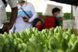 Pemprov Lampung: Pengembangan kawasan hortikultura maksimalkan ekspor buah