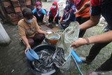 Sejumlah guru memanen ikan lele dari kolam terpal di SD Negeri Pesantren 2, Kota Kediri, Jawa Timur, Rabu (15/9/2021). Budidaya lele dengan memanfaatkan halaman belakang sekolah tersebut guna memberi contoh siswa berwirausaha. Antara Jatim/Prasetia Fauzani/zk