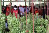 Lampung ingin pengembangan kawasan hortikultura naikan ekspor komoditas buah