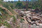 Puluhan hektare lahan sawah di Beloto, Flores Timur terancam gagal tanam