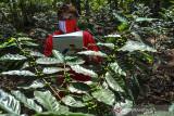 Petani mitra binaan Pertamina Geothermal Energy (PGE) Area Karaha melakukan pendataan jumlah biji kopi pada tanaman kopi arabika di Desa Dirgahayu, Kabupaten Tasikmalaya, Jawa Barat, Rabu (15/9/2021). PGE Area Karaha membantu pemulihan ekonomi kelompok tani dengan program pemberdayaan, peningkatan produksi dan mengelola kopi secara efektif dari mulai hulu hingga hilir ditengah pandemi COVID-19. ANTARA FOTO/Adeng Bustomi/agr
