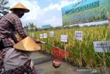 Bupati : Pertanian salah satu sektor unggulan dan strategis di Bantul