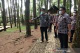 Bantul memastikan kesiapan uji coba pembukaan wisata Pinus Mangunan