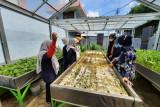 Pertamina tingkatkan keterampilan budi daya hidroponik penghuni Lapas Perempuan Palembang