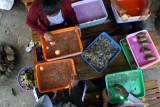 Produksi ikan di PPN Sungailiat capai Rp13.3 miliar
