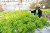 Petani mengecek kadar kelembaban air di Tugu Hidroponic desa Tugu, Kecamatan Sliyeg, Indramayu, Jawa Barat, Sabtu (18/9/2021). Petani muda di desa itu memanfaatkan teknologi digital saat bertani untuk memudahkan dalam proses pengolahan kebun mulai dari memberi nutrisi, memupuk, mengecek kelembaban air dan temperatur udara serta memantau masa penanaman hingga masa panen sekaligus melakukan pemasaran hasil pertanian secara daring. ANTARA FOTO/Dedhez Anggara/agr
