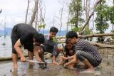 Mahasiswa Al Azhar Jakarta tanam 1.000 pohon mangrove di Donggala Sulteng