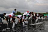 Dukung SDG's, Pertamina salurkan bantuan budi daya udang vaname di Cilacap