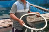 Pembudidaya ikan di Lampung kembangkan bandeng air laut
