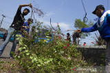 Warga membersihkan sampah dan tanaman yang menjalar saat memperingati hari bersih-bersih sedunia di kawasan Cikampek, Karawang, Jawa Barat, Minggu (19/9/2021). Kegiatan tersebut bertujuan untuk mengajak masyarakat sadar kebersihan lingkungan dan membuang sampah pada tempatnya. ANTARA FOTO/M Ibnu Chazar/agr