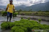 Lahan pertanian Kota Palu menyusut  karena pengembangan infrastruktur