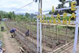 Lapas Kalabahi ubah lahan kosong jadi kebun sayur