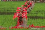 Destinasi Wisata Persawahan Di Banyuwangi