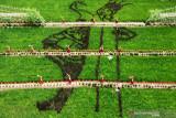 Foto udara panorama sawah bermotif penari Gandrung dari padi black madrasdi Sawah Banjar di Licin, Banyuwangi, Jawa Timur, Senin (20/9/2021). Wisata persawahan tersebut diharapkan dapat menarik wisatawan baik lokal ataupun mancanegara untuk mengenal lebih dekat mengenai pertanian khususnya tanaman padi.Antara Jatim/Budi Candra Setya/zk