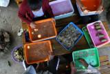 Produksi Kerupuk Tulang Ikan Patin