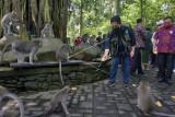 Menteri BUMN Erick Thohir memberikan makanan ke sejumlah monyet di objek wisata Monkey Forest, Ubud, Gianyar, Bali, Senin (20/9/2021). Kunjungan Menteri BUMN ke obyek wisata yang dihuni sekitar 1.200 monyet tersebut untuk memberi bantuan pakan hewan kepada pengelola obyek wisata di masa pandemi COVID-19. ANTARA FOTO/Nyoman Hendra Wibowo/nym.