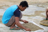Para petani kopi di Lampung harapkan produksi terserap maksimal