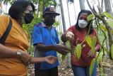 Kemenkumham larang petani vanili  jual hasil ke tengkulak diluar MPIG