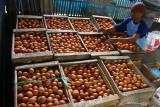 Pekerja menimbang telur ayam hasil panen di sebuah peternakan ayam petelur di Wonokoyo, Malang, Jawa Timur, Selasa (21/9/2021). Akibat turunnya harga telur ayam yang berada di kisaran Rp 14.500 per kilogram dalam tiga bulan terakhir membuat peternak ayam petelur setempat terpaksa melakukan pemangkasan stok atau afkir untuk mengurangi kerugian dan mengurangi pembengkakan biaya pakan. Antara Jatim/Ari Bowo Sucipto/zk