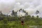 Sejumlah relawan berupaya memadamkan kebakaran lahan di Kecamatan Liang Anggang, Banjarbaru, Kalimantan Selatan, Selasa (21/9/2021). Kencangnya angin di lokasi yang terbakar membuat api dengan cepat membakar lahan yang diperkirakan mencapai puluhan hektare hingga kini BPBD Kota Banjarbaru dibantu relawan pemadam kebakaran Kota Banjarmasin berupaya memadamkan api yang mendekati permukiman penduduk di daerah setempat. Foto Antaranews Kalsel/Bayu Pratama S.