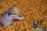 Komisi IV DPR minta pemerintah sikapi persoalan jagung bersubsidi