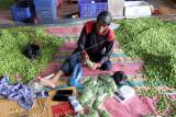 Sejumlah pekerja membungkus petai (Parkia speciosa) untuk diekspor ke Malaysia lewat Pelabuhan Rakyat Sungai Dumai, Riau, Rabu (22/9/2021). Petai dari Dumai menembus pasar ekspor Malaysia dalam sepekan pengiriman bisa dua kali menggunakan kapal laut sebanyak 10 hingga 15 ton dan pada tahun ini memiliki kontrak ekspor petai sebanyak 500 ton ke negara tersebut. ANTARA FOTO/Aswaddy Hamid/foc.