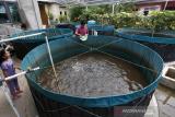 Warga Banda Aceh ramai-ramai budi daya ikan tawar selama pandemi COVID-19