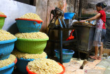 Pekerja membuat tempe dari kedelai impor di sentra industri tempe di Sanan, Malang, Jawa Timur, Kamis (23/9/2021). Fluktuasi harga kedelai impor yang tergolong tinggi yakni berada di kisaran Rp9.700 per kilogram membuat perajin tempe setempat memperkecil ukuran tempe serta menaikkan harga dari Rp1.500 menjadi 2.000 rupiah per bungkus untuk mengatasi pembengkakan biaya produksi dalam enam bulan terakhir. Antara Jatim/Ari Bowo Sucipto/zk