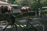 Gembira Loka Zoo menolak seratusan pengunjung dalam sehari