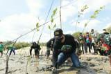 Semen Gresik tanam 2.250 mangrove jaga ekosistem