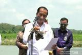 Jokowi targetkan rehabilitasi 34 ribu hektare lahan mangrove
