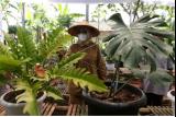 Bupati Banyuwangi Ipuk Fiestiandani Azwar Anas mengamati tanaman hias di Banyuwangi, Jawa Timur, Senin (20/9/2021). Tanaman hias jenis Monstera dan Philodendron yang dikembangkan oleh komunitas bunga di Banyuwangi itu mampu menembus pasar ekspor ke Singapura. ANTARA FOTO/Budi Candra Setya/rwa.