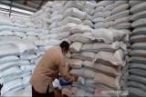Realisasi pengadaan pangan Bulog Surakarta capai 23.600 ton