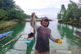 Kabupaten Simeulue Aceh ekspor 15 ton gurita ke Jepang