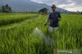 Pemkot Palu  dorong pktan jadi penangkar benih padi varietas unggul