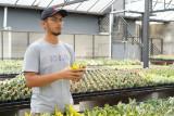 Kementan: Regenerasi petani mulai terlihat