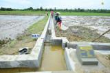 Kementerian PUPR catat realisasi padat karya tata guna irigasi capai Rp2,4 triliun