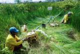 Kabupaten Banyuasin susun dokumen perlindungan ekosistem gambut