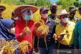 Pemkab Buol  bantu petani garap lahan pertanian secara optimal
