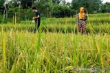 Keterlibatan generasi muda dalam pengembangan pertanian sangat diperlukan