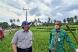 Kantor Staf Presiden kawal produksi padi biofortifikasi di Provinsi Lampung