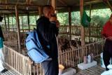 Alumni Polbangtan Kementan dampingi petani Boyolali wujudkan