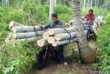 Jasa ojek mengangkut kayu log di pegununganwilayah Pucanglaban, Tulungagung, Jawa Timur, Minggu (26/9/2021). Sehari mengangkut kayu, jasa ojek angkut kayu untuk medan terjal dan pegunungan di daerah itu mendapat upah mulai Rp200 ribu hingga Rp300 ribu. Antara Jatim/Destyan Sujarwoko/zk.