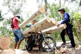 Pekerja menaikkan kayu log ke atas angkutan ojek angkut kayu log di pegunungan wilayah Pucanglaban, Tulungagung, Jawa Timur, Minggu (26/9/2021).  Sehari mengangkut kayu, jasa ojek angkut kayu untuk medan terjal dan pegunungan di daerah itu mendapat upah mulai Rp200 ribu hingga Rp300 ribu. Antara Jatim/Destyan Sujarwoko/zk.
