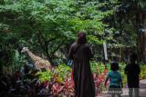Pengunjung melihat jerapah di Kebun Binatang Bandung, Jawa Barat, Senin (27/9/2021). Kebun Binatang Bandung yang biasa disebut Bandung Zoological Garden kembali membuka kunjungan bagi warga dengan menerapkan protokol kesehatan yang ketat di masa PPKM level 3 di Kota Bandung. ANTARA FOTO/Raisan Al Farisi/agr