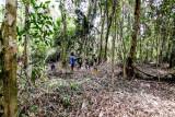 Hutan Desa Bukit Bamba berpotensi dikembangkan sebagai hutan penelitian